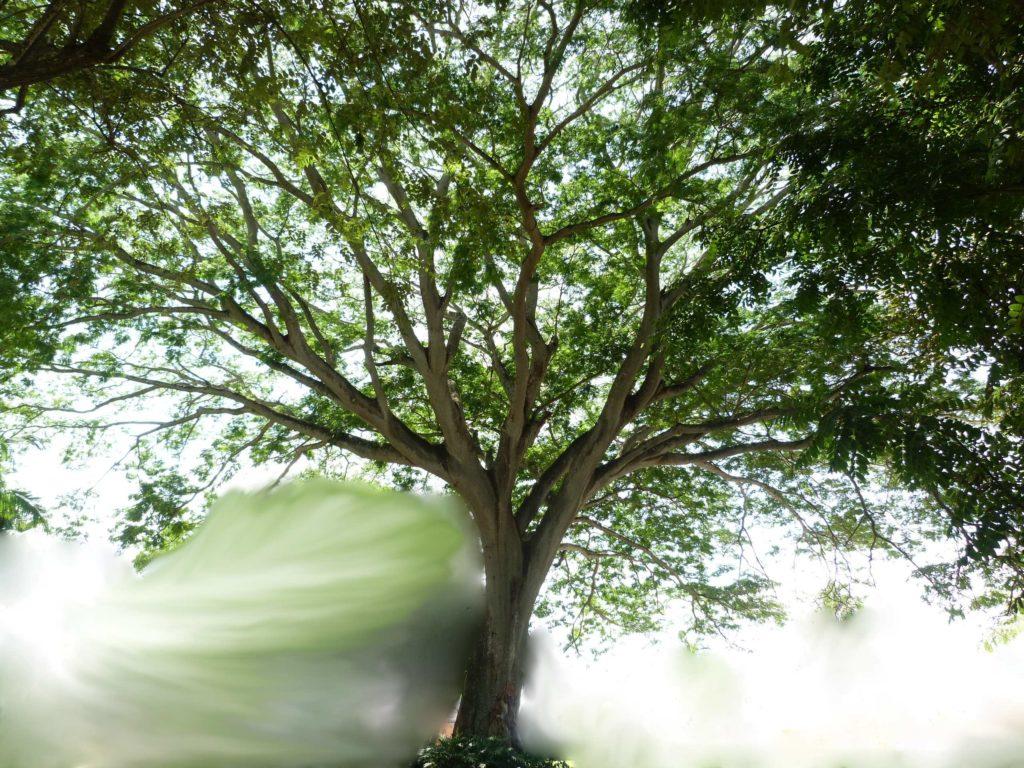 großer Baum im Nebel